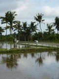 L'agricoltore sta piantando il riso sui campi Immagine Stock Libera da Diritti