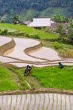 L'agricoltore sta piantando il riso sul campo a terrazze per la nuova stagione Immagini Stock Libere da Diritti