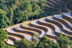 L'agricoltore sta piantando il riso sul campo a terrazze per la nuova stagione Fotografie Stock