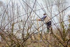 L'agricoltore sta potando i rami degli alberi da frutto in frutteto facendo uso di lungamente Fotografie Stock