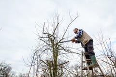 L'agricoltore sta potando i rami degli alberi da frutto in frutteto facendo uso di lungamente Fotografia Stock