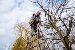 L'agricoltore sta potando i rami degli alberi da frutto in frutteto facendo uso di lungamente Fotografie Stock Libere da Diritti