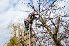 L'agricoltore sta potando i rami degli alberi da frutto in frutteto facendo uso di lungamente Fotografia Stock Libera da Diritti