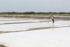 L'agricoltore sta raccogliendo l'azienda agricola del sale, arera di Pondicherry Immagini Stock Libere da Diritti