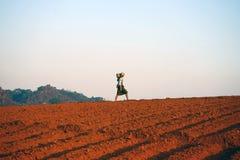 L'agricoltore sul campo Fotografia Stock Libera da Diritti