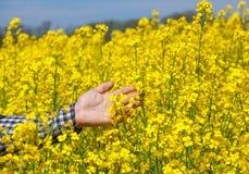 L'agricoltore sul campo tocca i fiori della violenza Immagini Stock
