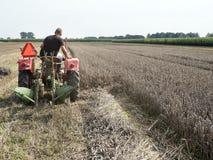 L'agricoltore sul vecchio trattore falcia il grano con l'aratro dietro Immagine Stock Libera da Diritti