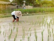L'agricoltore tailandese sta lavorando immagini stock libere da diritti