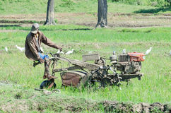 L'agricoltore tratta il giacimento del riso. Immagine Stock
