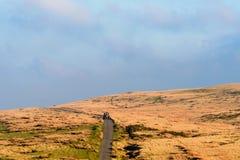 L'agricoltore in trattore rosso in Brecon guida il parco nazionale Fotografia Stock Libera da Diritti