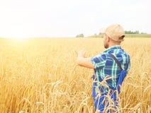 L'agricoltore in una camicia di plaid ha controllato il suo campo Mostra il grano h Immagini Stock