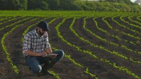 L'agricoltore utilizza la compressa nel campo di giovane girasole stock footage