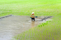 L'agricoltore vietnamita lavora al giacimento del riso Ninh Binh, Vietnam Fotografie Stock Libere da Diritti