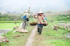 L'agricoltore vietnamita lavora al giacimento del riso Ninh Binh, Vietnam Fotografia Stock