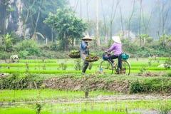 L'agricoltore vietnamita lavora al giacimento del riso Ninh Binh, Vietnam Fotografia Stock Libera da Diritti