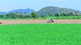 L'agricoltura Immagine Stock