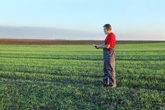 L'agricoltura, agricoltore esamina il giacimento di grano facendo uso della compressa Immagini Stock Libere da Diritti
