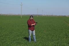 L'agricoltura, agricoltore esamina la pianta del grano nel campo Immagini Stock