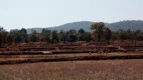 L'agricoltura dell'inquadratura della montagna intimorisce gli animali Fotografie Stock