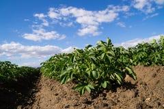 L'agricoltura di California Immagini Stock