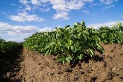 L'agricoltura di California Immagini Stock Libere da Diritti