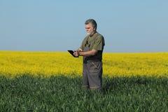L'agricoltura, giacimento di grano d'esame dell'agricoltore con il seme di ravizzone pianta la i Immagine Stock