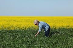 L'agricoltura, giacimento di grano d'esame dell'agricoltore con il seme di ravizzone pianta la i Immagini Stock Libere da Diritti
