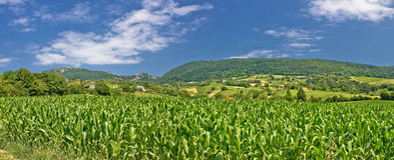 L'agricoltura verde sistema la vista panoramica Fotografia Stock