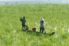 L'agriculteur asiatique, bateau de rangée, famille, vont travailler photo libre de droits
