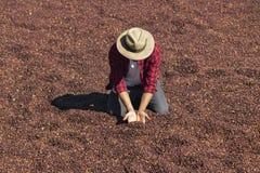 L'agriculteur avec le chapeau se tenant sur le café sec, tenant le grain de café sec, a rôti le grain de café à l'arrière-plan, f images libres de droits