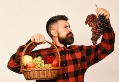 L'agriculteur avec le visage strict montre des pommes, des canneberges et des raisins mûrs image stock