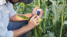 L'agriculteur avec les contrôles numériques tenus dans la main d'un dispositif pour des nitrates moissonnent banque de vidéos