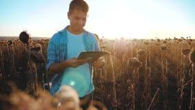 L'agriculteur d'homme avec le comprimé dans le domaine de travaux de tournesol va au sol de promenades de sol le steadicam ralent banque de vidéos