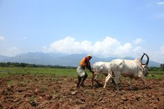 L'agriculteur laboure le champ agricole Image stock