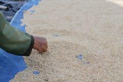 L'agriculteur rassemblent des déchets en riz sec photo libre de droits