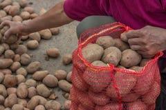 L'agriculteur remplissent des sacs de pommes de terre au marché d'agriculteurs Images stock