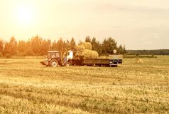 L'agriculteur sur un tracteur sélectionne la balle de meule de foin et de charges de foin dans la remorque, agriculture photographie stock libre de droits
