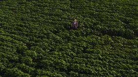 L'agriculteur utilise une tablette sur des tournesols mettent en place Concept agricole fut? clips vidéos