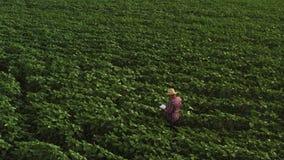L'agriculteur utilise une tablette sur des tournesols mettent en place Concept agricole fut? banque de vidéos