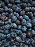 L'agriculture, automne, baie, bleu, plan rapproché, couleur, dessert, régime, mangent, nourriture, fraîche, fruit, jardin, groupe Photo stock