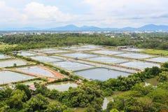 L'agriculture de crevette Photographie stock libre de droits