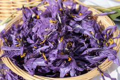 L'agriculture italienne, fleurs de safran a mis pour sécher dans un panier Photographie stock libre de droits