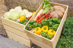 L'agriculture a moissonné des produits sur les planches en bois Image libre de droits