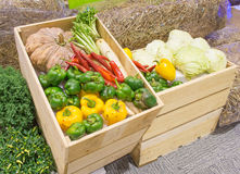 L'agriculture a moissonné des produits sur les planches en bois Photo libre de droits