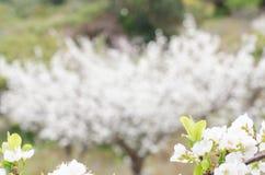 l'agriculture s'embranche arbre savoureux de plomb de fruit de concept image stock
