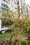 l'agriculture s'embranche arbre savoureux de plomb de fruit de concept Photo libre de droits