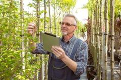L'agronomo adulto esamina le piantine geneticamente che modificano le piante Le mani che tengono la compressa Nei vetri, una barb fotografia stock