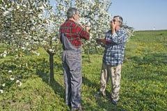 L'agronomo e l'agricoltore grave discutono nel frutteto Fotografia Stock