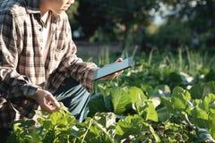 L'agronomo Using una compressa per ha letto un rapporto e la seduta in un AG immagine stock libera da diritti