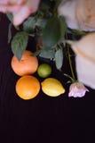L'agrume Rose Image libre de droits